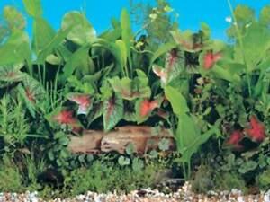 "15"" TALL Butterfly Background Poster for Aquarium / Vivarium / Fish Tank / Viv"