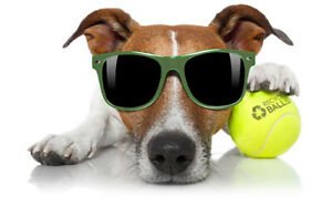 25 used tennis balls  FREE SHIP & FREE RECYCLING support RecycleBalls nonprofit