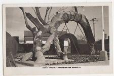 The Old Gum Tree Glenelg Australia 1947 Plain Back RP Card 418a