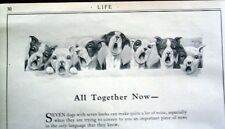 Seven Boston Terrier Dogs Singing Reprint By Robert Dickey 6 1/4 x 11