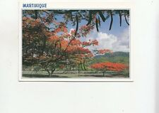 BF28169 martinique caribbean islands flamboyants sur la route   front/back image