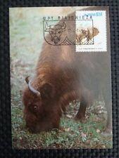 POLEN MK ANIMALS BISON WISENT MAXIMUMKARTE CARTE MAXIMUM CARD MC CM a9957