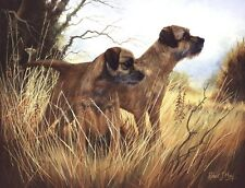 Border Terrier Print by Robert J. May