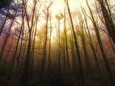 PHOTO PAINTING FOREST TREES SUNLIGHT LARGE WALL ART PRINT POSTER PICTURE LF2298