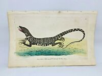 Monitor Lizard - 1783 RARE SHAW & NODDER Hand Colored Copper Engraving