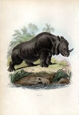 1851 CUVIER HC ENGRAVING indian rhinoceros