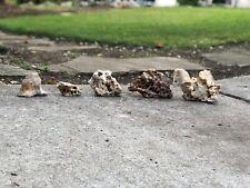 New listing 5 Texas Natural Holey Rocks Honeycomb For Fish Reptiles Aquarium Cichlid Grey