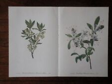 Set of 18 Vintage Mary Walcott Wildflower Prints - Azalea Dogwood Fireweed