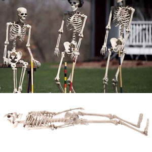 Halloween Party Skeleton 160cm Poseable Human Giant Life Size Perfect Decoration