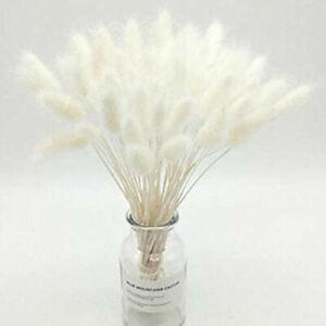 50 Stück Getrocknete Blumen Natürlich Trockenblumen Pflanzen DIY Home Dekoration