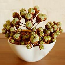 New listing 60pcs Succulents Rare Mini Potted Flower Seeds Home Office Decoratives 14# Tm