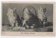 The Raiders Caught Cats Vintage Postcard US082