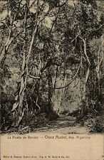 Chaco Austral argentina ak ~ 1900 la picada de benitez bosque-camino plantas botánica