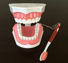 Dental Adult Education Teaching Model with Removable Lower Teeth and Toothbrush