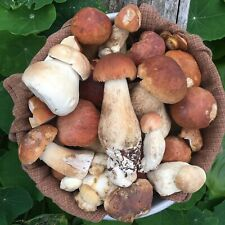 Dried Porcini Mushrooms Boletus Edulis California King Gourmet Chef Foodie