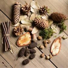 Natural Pine Cone Dried Table Decor Creative Micro Landscape Photo Props JD