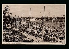 Social History HOP PICKING Hop Garden & Pickers c1920/30s? PPC