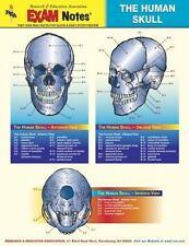 Human Skull Anatomy EXAM Notes (EXAM Notes Reference Charts)