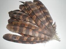 lot de 10 plumes faisane vénéré 15  cm