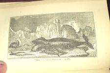 Narrative Of Descubrimiento y Aventura en el Polar Seas 1855 Ballenero Rara con