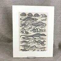1894 Antico Stampa Rettili Snakes Lizards Tartaruga Animali Incisione
