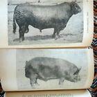 Antique+Illustrated+1915+Veterinary+Medicine+%7ECHARLES+J+KORINEK%7E+Hardback+Book