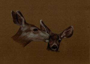 WATERCOLOUR PAINTING SHOWING HEADS OF TWO POSSIBLY ROE DEER