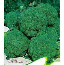 FD1880 Broccoli Seed Cauliflower Seed Green Vegetable Seeds ~1 Pack 50 Seeds~ G
