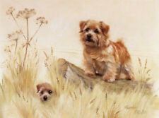 Norfolk Terrier Limited Edition Art Print by Uk Artist Gail Tointon