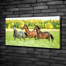 Leinwandbild Kunst-Druck 100x50 Bilder Tiere Haustiere