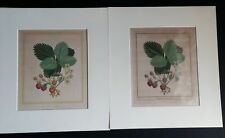 18 Century 1st Edition Botanicals M.FRANCOISE BASSEPORTE Etching, Before & After