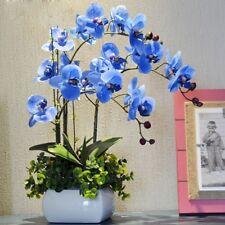 Orchid Phalaenopsis Seeds Mixed 22 Types Flower Seeds Senior Ornamental 200 Pcs