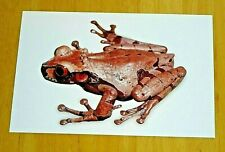 FROG POSTCARD ~ ANOTHECA SPINOSA - CORONATED TREE FROG - STEINDACHNER, 1864