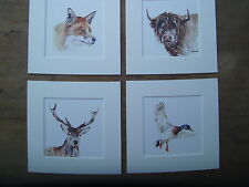 """Watercolour Highland cow, Stag, Fox, duck  Prints   x 4, in mounts  8"""" x 8"""""""