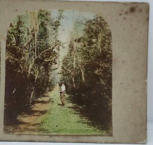 Antique Stereoview, Scene in Whitekinghts near Reading, Garden with Man
