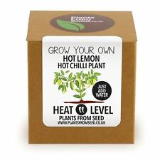 Plants From Seed - Grow Your Own Hot Lemon Chilli Plant Kit