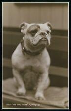 English Bulldog dog Who Goes There ? original old c1940s photo postcard