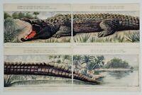 Huld's Puzzle Series no. 1a-1d Alligator 4 Part Installment c1905 Postcard O2
