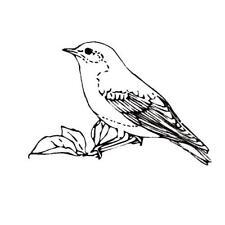 Bluebird unmounted rubber stamp, bird, nature #9
