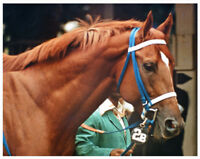 SECRETARIAT - ORIGINAL 1973 MARLBORO CUP PHOTO! BEAUTIFUL HORSE RACING HEAD SHOT