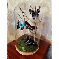 Large Glass Dome With Butterflies
