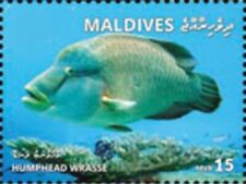 Maldives - 2019 Humphead Wrasse - Stamp - MLD1801local08a
