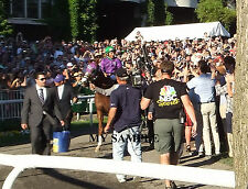 CALIFORNIA CHROME 8 by 10 PHOTO 2014  BELMONT STAKES PADDOCK HORSE RACING #4