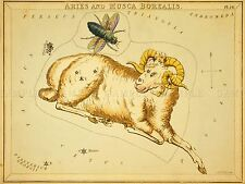 PAINTINGS DRAWING STAR MAP ARIES RAM BUG CONSTELLATION ART POSTER PRINT LV3125