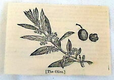 1832 magazine engraving ~ THE OLIVE fruit and flower