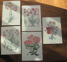 250 Postcards - Antique Botanical Engraving Reproduction NEW Printed in Italy