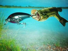 DOLPHIN USA CRAKBAIT  FAT BOY/SILVER SHAD RED EYE 3 1/2 INCH'S LONG BASS LURE !