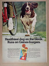 1967 English Springer Spaniel photo Gaines-burgers Dog Food vintage print Ad