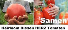 20x Riesen Herz Tomaten Gemüse Samen lecker Tomate Neu Selten In DE #257