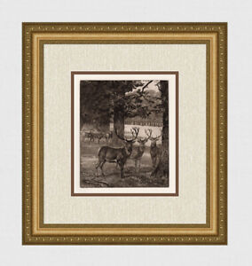 "WOW Heywood HARDY ORIGINAL 1800s Etching ""Windsor Park, Deer"" Gallery Framed COA"